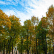 Yellow and green trees in front of the sky — Stock Photo