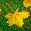 Yellow leaf on the green grass — Stock Photo #13733083
