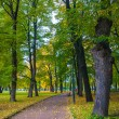 Beautiful park in autumn — Stock Photo