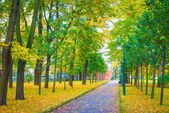 Road in the park with green and yellow trees and fallen leaves — Stock Photo