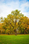 Tree in the park in autumn — Stock Photo