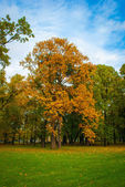 Alone tree in the park — Stock Photo