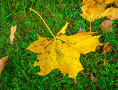 Yellow leaf on the green grass — Stock Photo