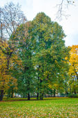Tree in autumn — Stock Photo