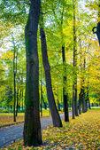 Träden i parken — Stockfoto