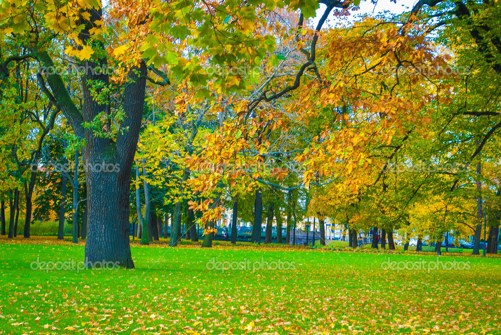 Beautiful park in autumn — Stock Photo #13733106