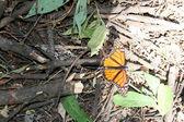 Motyl, rośliny i charakter meksyk — Zdjęcie stockowe