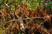 Plants in Mexico — Stock Photo