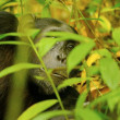 Royalty-Free Stock Photo: Gorilla among plants