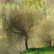 Small tree on the hill  — Stock Photo