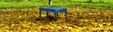 Blue bench on the yellow leaves — Stock Photo