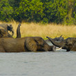 Group of African elephants in the water - Stock Photo