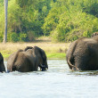 Royalty-Free Stock Photo: Elephants take shower in the river