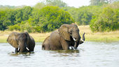 Elephants take shower in the water — Stock Photo