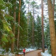 Постер, плакат: Pushkin forest in the morning in Mikhaylovskoye Museum Reserve w