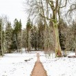 Snowy forest in winter — Stock Photo