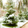 Snowy forest in winter — Stock Photo #14736927