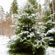 Snowy forest in winter — Stock Photo #14736935