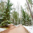 Snowy forest in winter — Stock Photo #14736989
