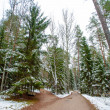 Snowy forest in winter — Stock Photo #14737005