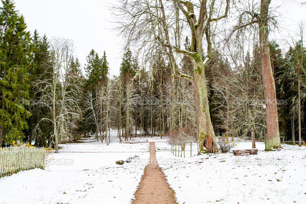 Snowy forest in winter — Stock Photo #14736833