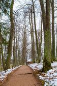 Straße in einem wald im winter — Stockfoto