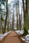 Road in a forest in winter — Stock Photo