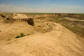 Chorasmië, oezbekistan, woestijn, azië — Stockfoto