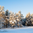 Beautiful view of a Russian forest in winter - Stock Photo