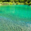 Green river in Croatia, Europe — Stock Photo