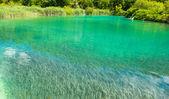 Green river in Croatia, Europe — Stock Photo