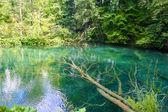 Transparente darstellung des flusses im kroatischen wald — Stockfoto