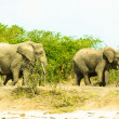 Flock of elephants walk over savanna, Africa — Foto Stock #16921383
