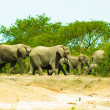 Foto Stock: Flock of elephants walk over savanna, Africa