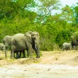 Royalty-Free Stock Photo: Family of the elephants in Africa