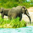 Elephant on the coast of the river — Stock Photo #16921455