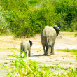Foto Stock: Elephant and its baby walk over savanna