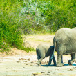 Foto Stock: Elephants family walk over savanna