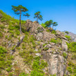 Stock Photo: Trees on the surface of the Mount Kumgang