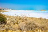 Coast of the Dead Sea, Israel — Stock Photo