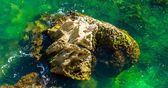 Stone in the green water — Stock Photo