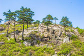 Trees on the surface of the Mount Kumgang — Stock Photo