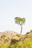 Alone tree on the Mount Kumgang in Kangwon-do, North Korea. — Stock Photo