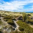 Landscape of The Falkland Islands — Stock Photo