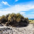 Landscape of The Falkland Islands — Stock Photo