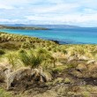 Stock Photo: Landscape of Falkland Islands