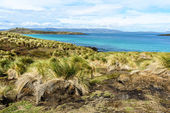 Landscape of The Falkland Islands — Foto Stock