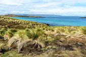 Paisaje de las islas malvinas (falkland — Foto de Stock