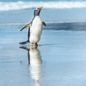 巴布亚企鹅在水中. — 图库照片
