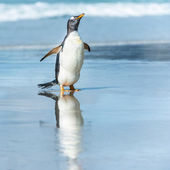 Gentoo penguin in the water. — Stok fotoğraf